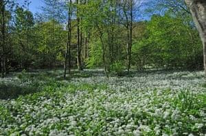 Green Shoots: green spaces you treasure