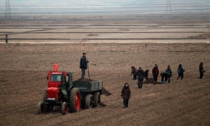 North Koreans farming