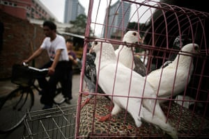 24 hours in pictures: Doves are sold at a street meat shop in Shanghai