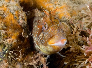 MCZ: Species to be found in recommended UK Marine Conservation Zones