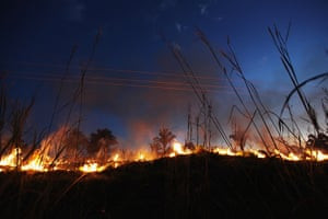 Amazon deforestation : Illegal burning clears bushes and small trees in Brazil