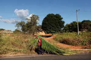 Amazon deforestation : A man carries a palm branch to use while constructing a thatch roof