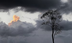 Week in Wildlife: Deforestation