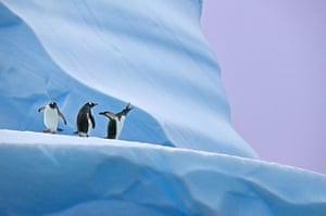 Week in Wildlife: Andy Rouse Wins Cherry Kearton Medal - 13 June 2012