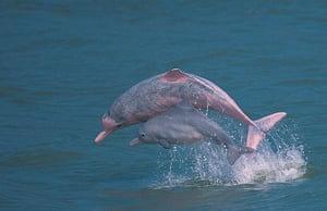 Week in Wildlife: Hong Kong Dolphin Conservation Society