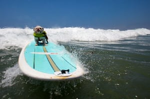 Surfing dogs : Surfing dogs
