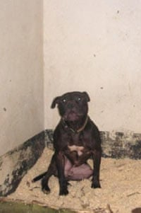 Lennox in his cell