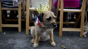 Jubilee: A dog wearing a crown and a Union Jack f
