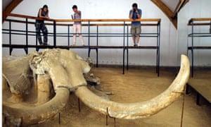 Mammoth from Kostolac mine, Serbia