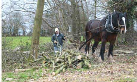 Herefordshire co-operative rescues local woodland to provide green energy