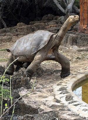 Lonesome George dies: Giant tortoise Lonesome George dies