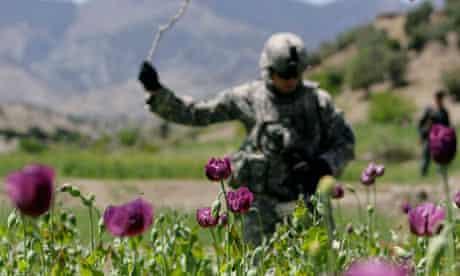 US soldier destroys opium poppies