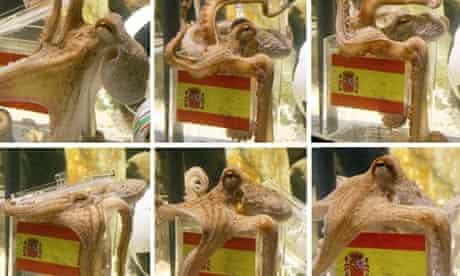 Paul the 'psychic' octopus