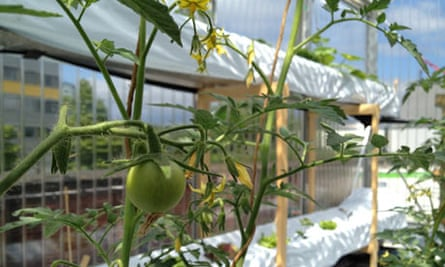 Efficient City Farming
