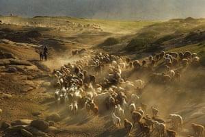 Shepherds in China