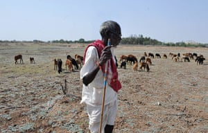 Shepherds in India