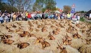 Shepherds: Hungary