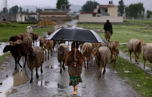 Shepherds: A Pakistani girl holds an umbrella as shelter from the rain