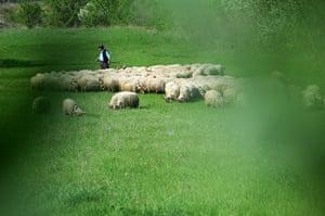 Shepherd in Hungary