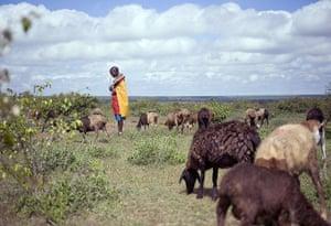 Shepherds: sheep grazing in Kenya