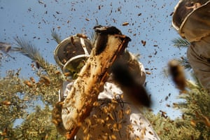 Gaza life: Palestinian beekeepers inspect hives.