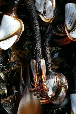 Week in wildlife: exotic mussels