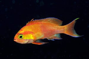 Marine Survey: Reef Fishes of the East Indies