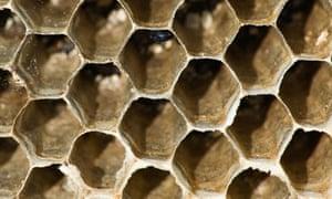 Hexagonal beehive cells