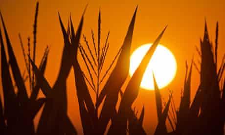 US drought corn