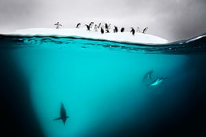 Eyewitness extra: Gentoo and chin strap penguins