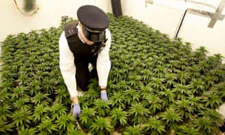 cannabis factory in a house in Leyton, east London