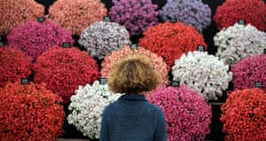 Hampton Court flower show: A visitor looks at a display in the Floral Marquee