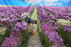 Hampton Court flower show: A worker lays hay amongst the flowers in a display