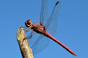 Green shoots: Readers Flickr group on dragonflies and Damselflies