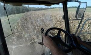 corn drought us food