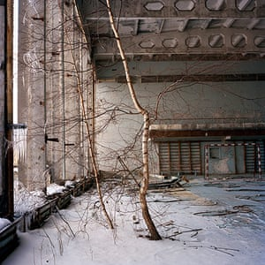 Prix Pictet Power : Birch tree growing on the second floor of a GYM