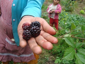 IFSW social work: Blackberries in hand