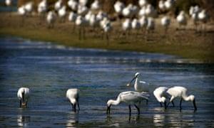 Birds stand in Bahia de Cadiz Natural Park