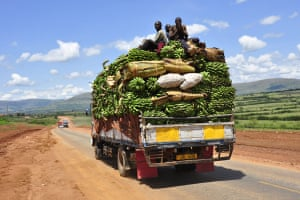 Cycle Africa: Cycle Africa plantain