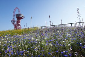Olympic flora gallery: The Annual Meadows near the orbit