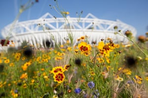 David Levene: The Annual Meadows at the Olympic Park