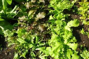 autumn salad mix