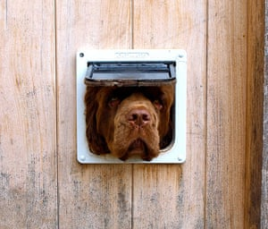Your Pictures: Square: A dog face in a cat flap