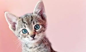 A very cute kitten