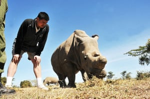 week in wildlife: Yao Ming, Wild Aid Ambassador