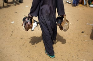 Livestock market: Niger Nomads Herdsmen, Tuareg and Peul