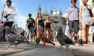 Painted pigeons in Venice