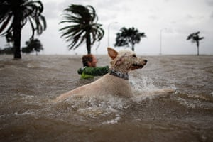 Tropical storm Isaac: Boy and dog swim in the rising water of Lake Pontchatrain