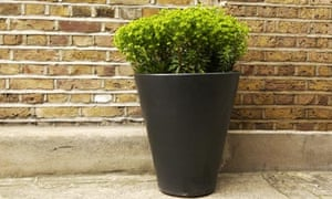Potted plant in front of wall