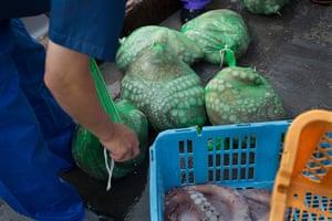 Soma, Japan: Japanese fisherman land their catch of octopus